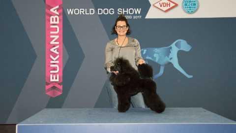 ARAMIS LES MOUSQUETAIRES Czarna Fuga – World Dog Show Leipzig 2017