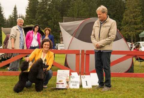 ARAMIS LES MOUSQUETAIRES Czarna Fuga – V International Dog Show Zakopane 13.08.2017