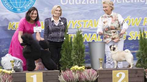 XLIV Karkonoska Wystawa Psów Rasowych Jelenia Góra 07.10.2018r.