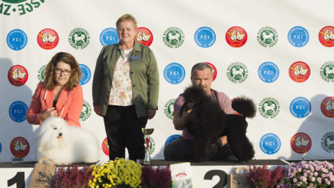 National Dog Show – Zabrze 13.10.2019 – #2 BOG