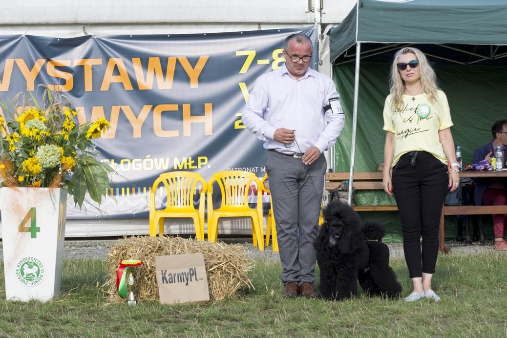Wystawa psów rzeszów
